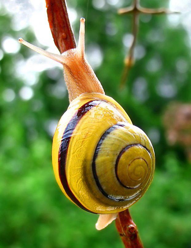 snail-wa_edit02